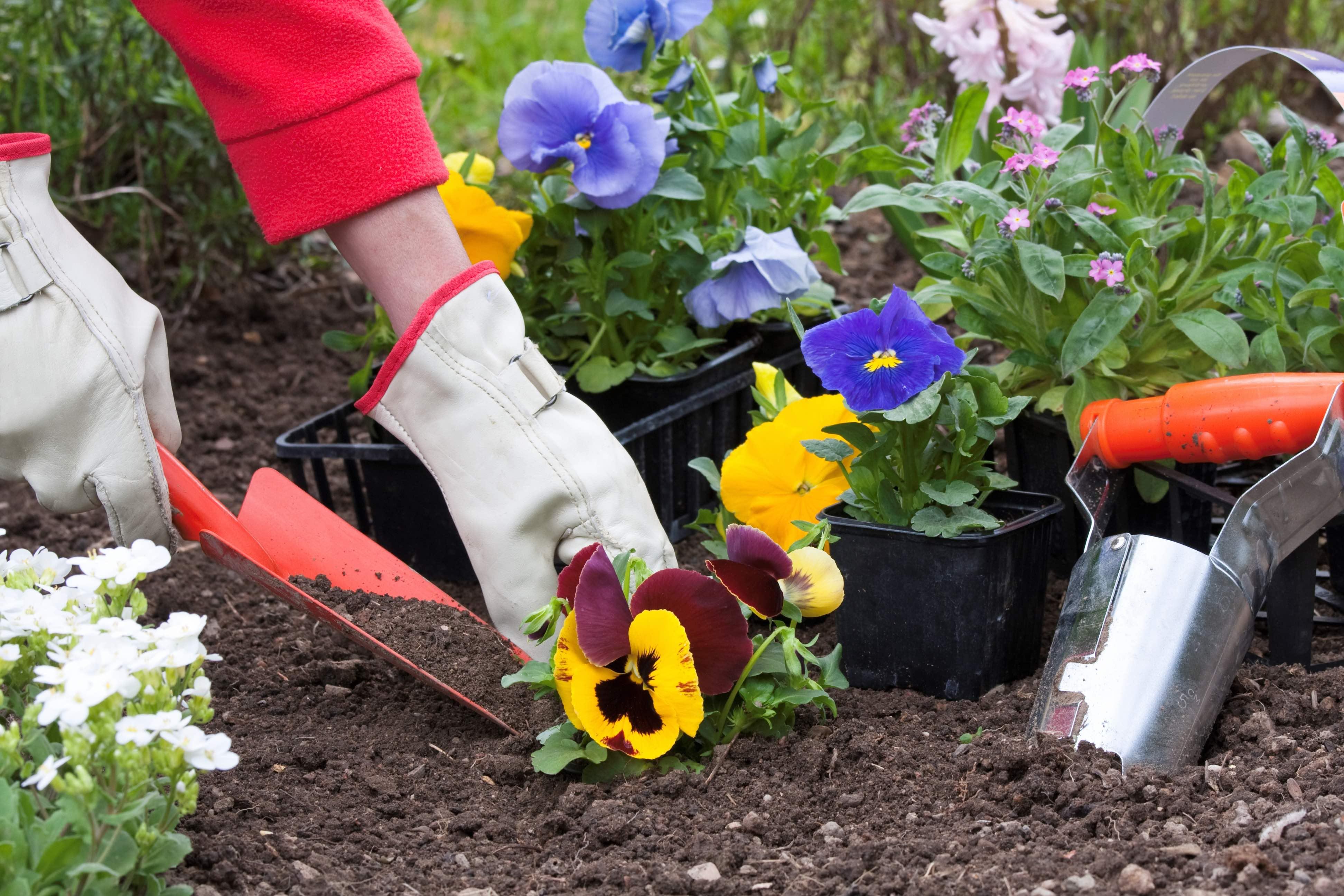 Как правильно рассадить цветы на участке и