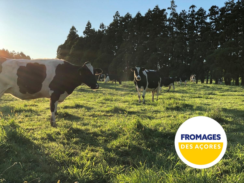 Les secrets de la laiterie des Açores